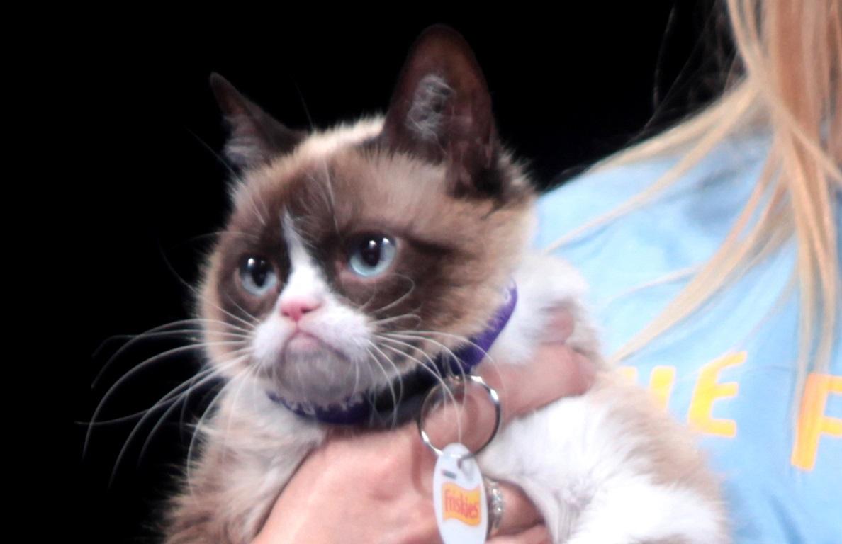 The Animal Abuse behind Grumpy Cat | Identity Magazine