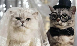 Cat-Wedding-640x424