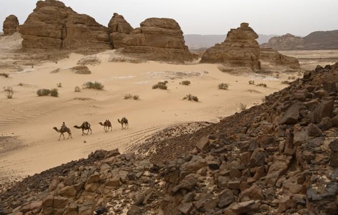 camels mt. sinai egypt