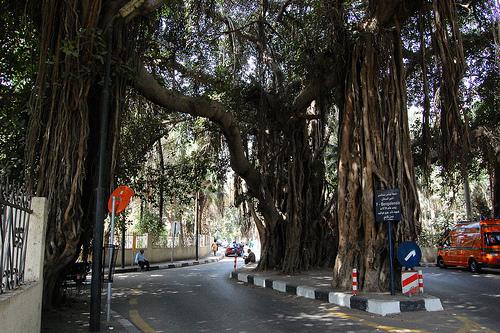 Banyan Trees Zamalek and Garden City