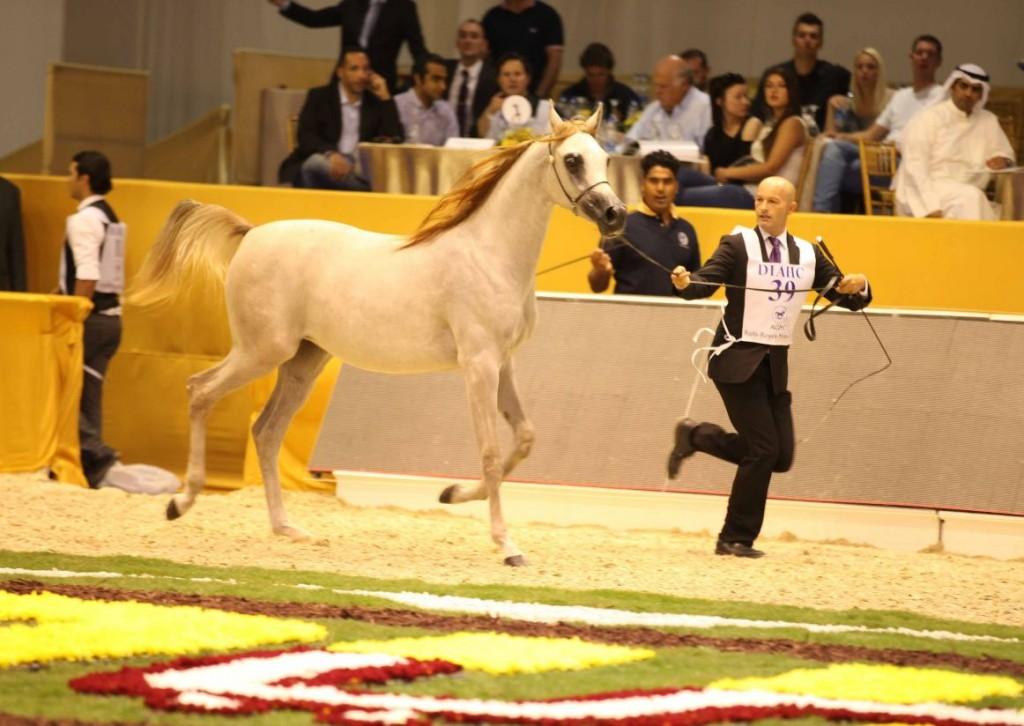 Dubai International Horse Fair and Championship 2