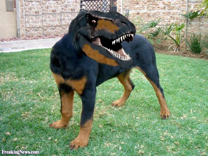 Rottweiler-Dinosaur-Dog--101008