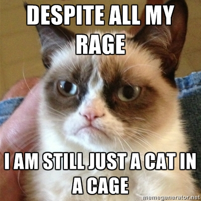 grumpy_cat_rage