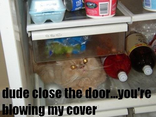 funny-cat-hiding-in-the-fridge