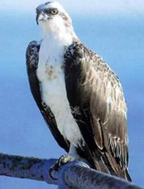 Ras Mohammed wildlife bird