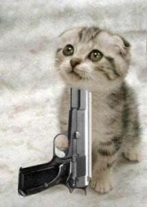 kitten-die
