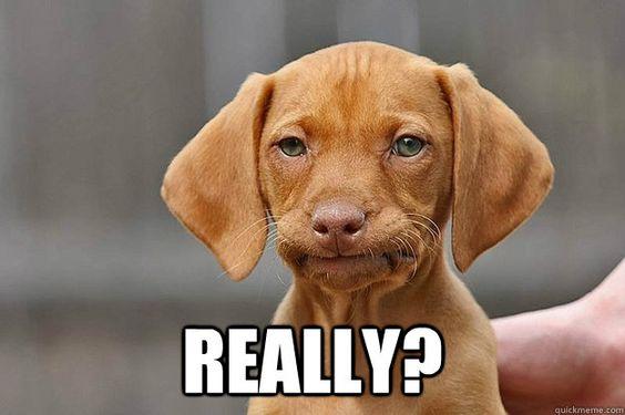 Puppy annoyed really meme