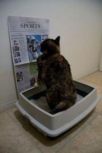 Cat-Reading-in-Bathroom