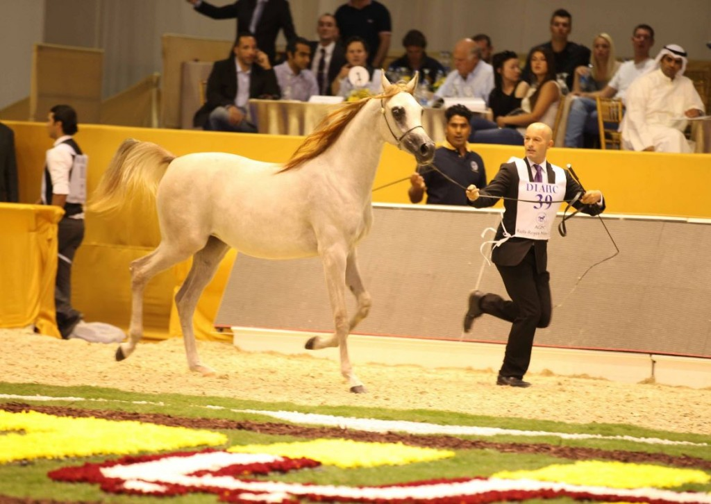 Dubai International Horse Fair and Championship 2