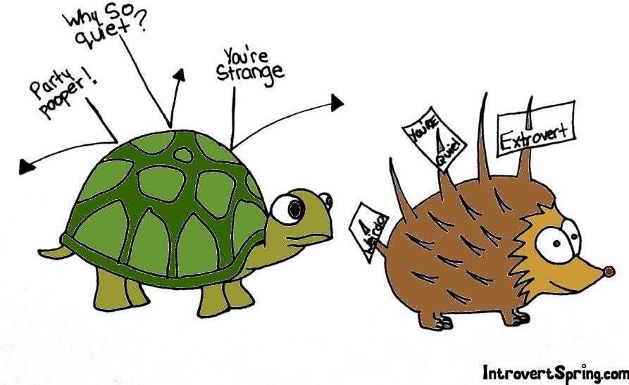 Turtle-vs.-Porcupine