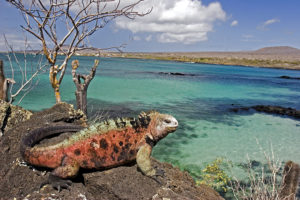 iguana-in-floriana-island-galapagos-islands-ecuador