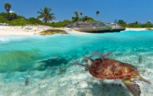 zanzibar-holiday-special-gold-zanzibar-beach-house-and-spa-pristine-ocean